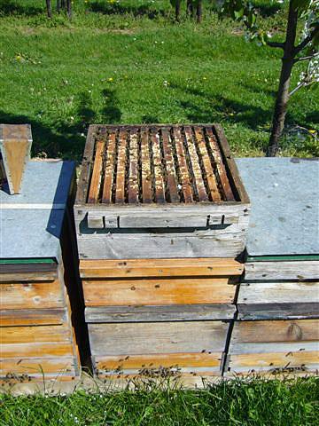 Bienenstock aus Weymouthskiefer